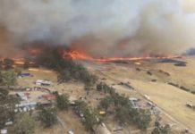 Aussie bushfire